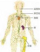 什么是免疫力,免疫力分类